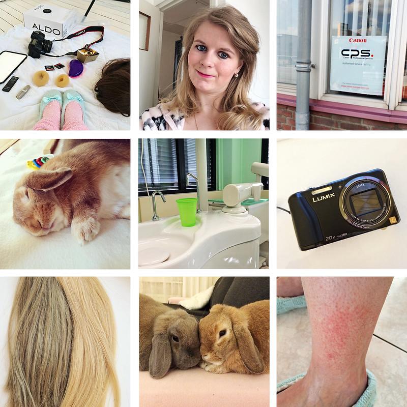 Diary blog #15 | foreverpetite.net