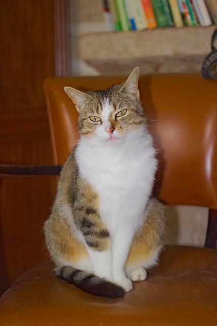 Lili sur un fauteuil