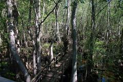 Beidler Forest-012