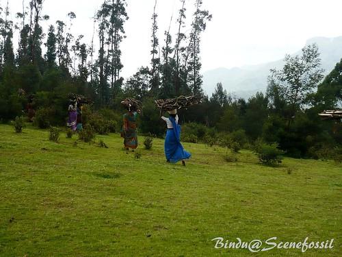 2. Women, forest, firewood, Kodaikanal