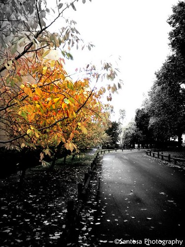 An Autumnal Road by mhsantosa