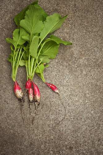 radishes - first harvest