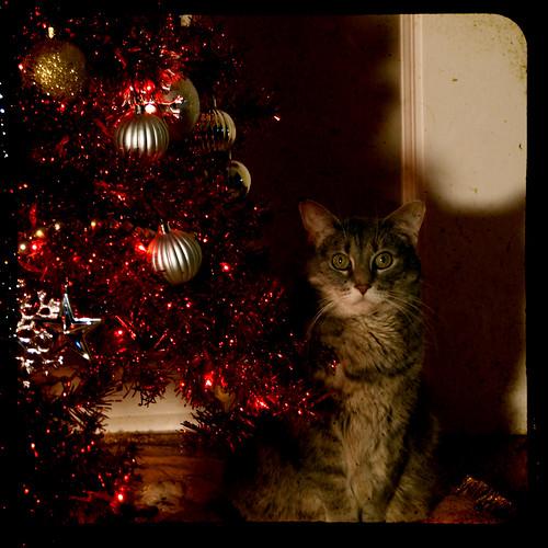Christmas Lucky 2