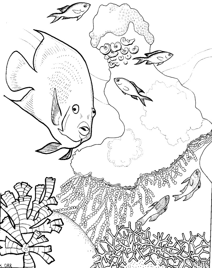 coral reef coloring pages for kids