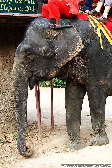 BKK_Angkor 995