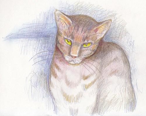 pencil-cat