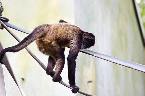 20110603_Zoo_16