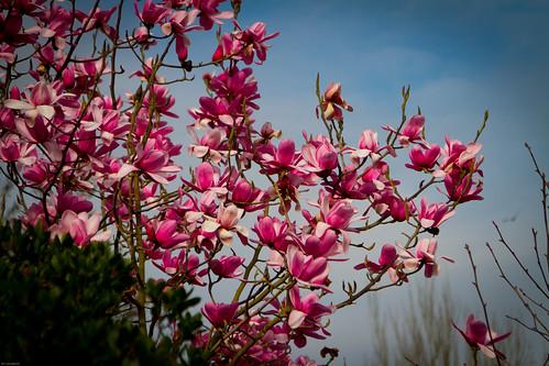 Signs of Spring I - Regent's Park