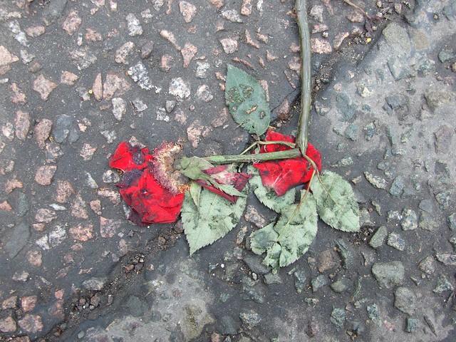 Broken Roses Petals Falling Rose