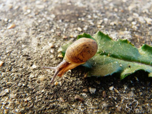 A teeny tiny snail in the garden