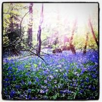 Walk at Lickey Hills in spring -> obligatory bluebells photo