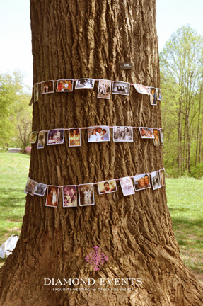 Tree wrapped with family pictures
