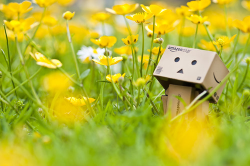 Danbo and the Buttercup Bokeh