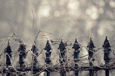 Saint John : Wrought Iron Vines