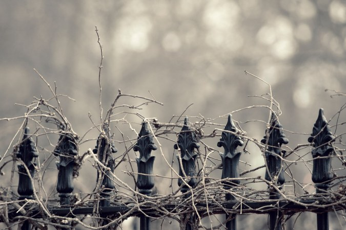 Saint John : Wrought Iron Vines