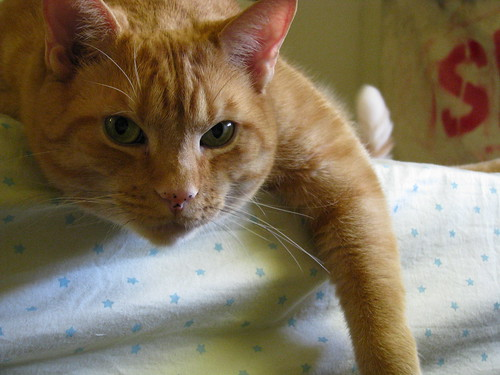 Bed Cat