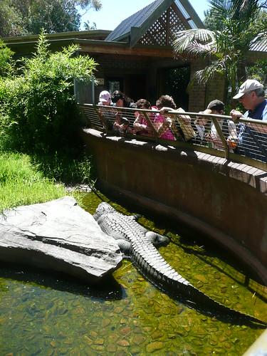 Adelaide Zoo - Crocodile