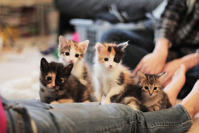 6 weeks old kittens