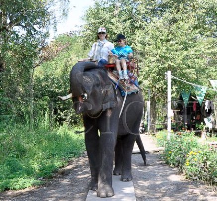 Bangkok - Elefant trekking