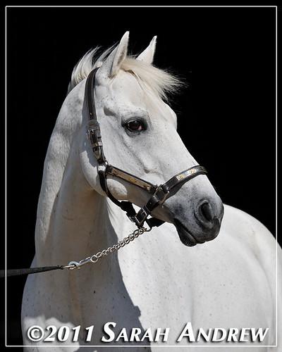 Gatsby, a Camelot Auction graduate