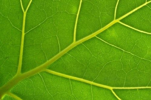 Leaf Structure XI