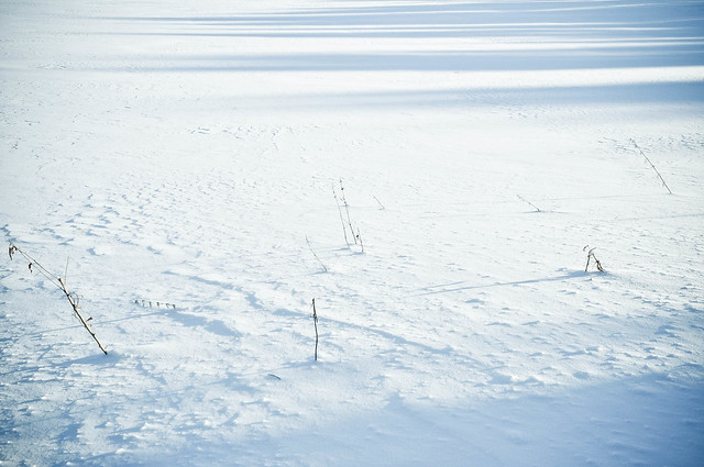 Snowfield shadows