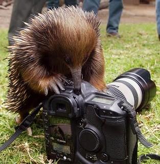 technologically advanced photographer