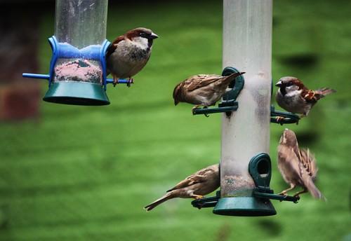 Bird Breakfast