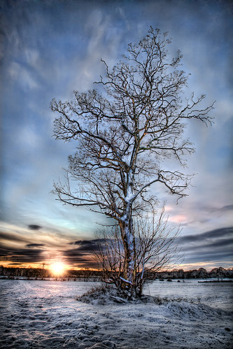 Snow Tree by Lapse of the Shutter