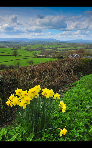 Daffodil Valley II by dogfrog