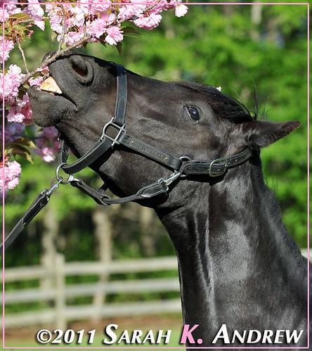 Brigid and the Blossoms