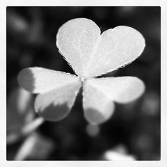 symbols of #love are all around #photoadaymay