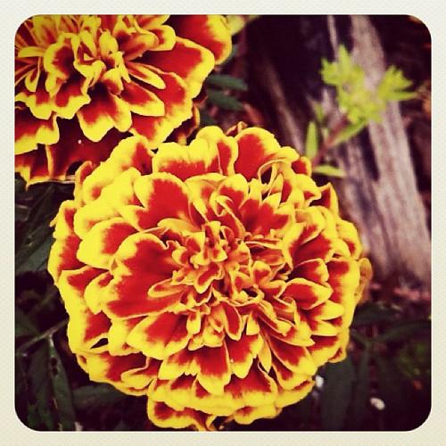 294: flower time!