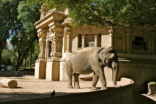 Elefante_0895