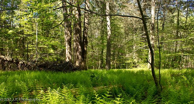 Fern Meadow