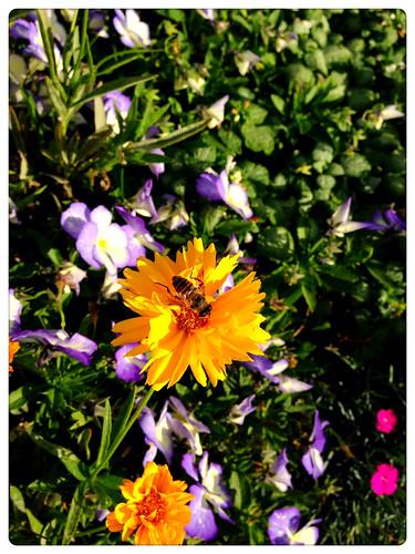 Buzzy Bee!