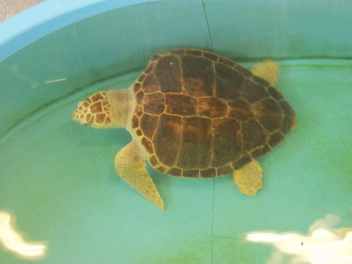 this turtle's name is Test