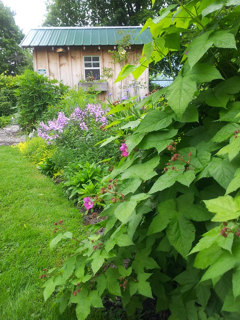 Wild Raspberry and Phlox