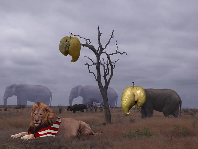 elefantelimon