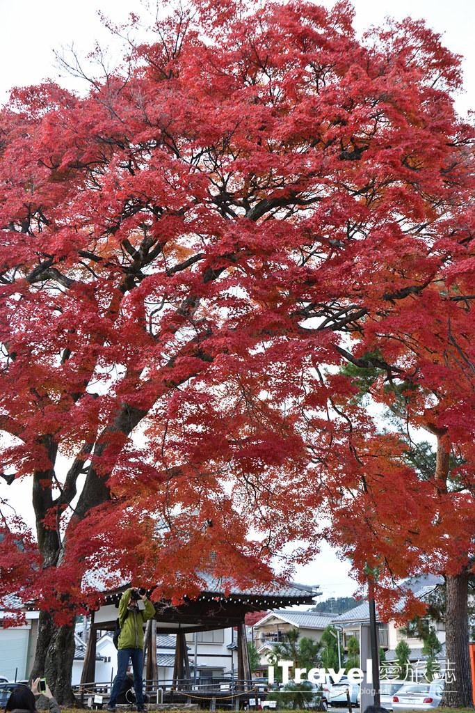 《京都赏枫景点》清凉寺:提供茶屋休憩赏枫的无料红叶景点。