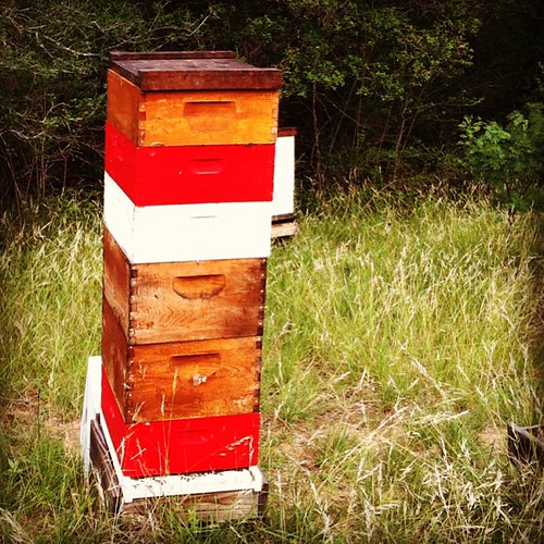 8 of 11 hives need honey supers at Deadman Creek - nice!