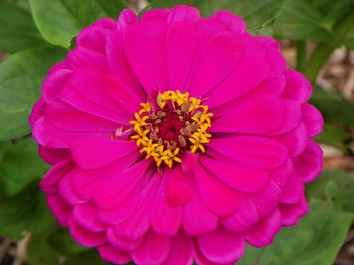 colour6