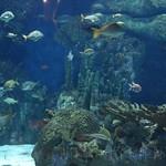 Oceanografic Miguel, acuario 01
