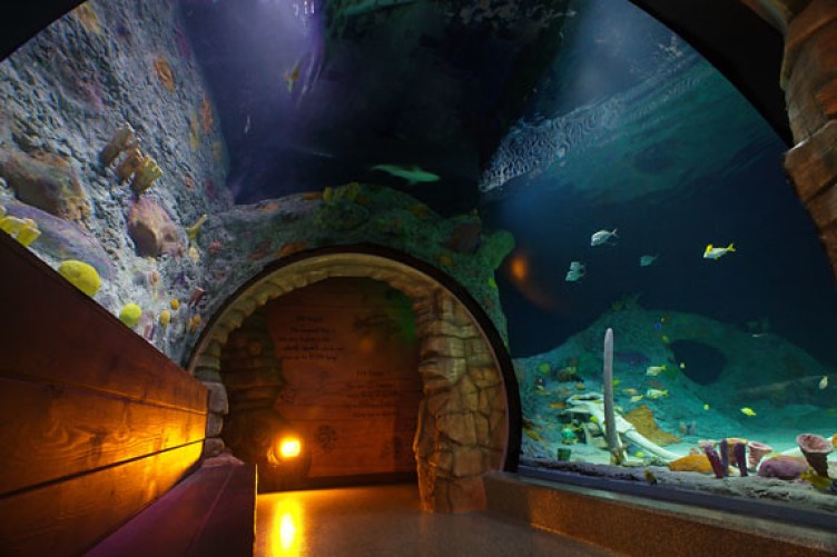 Image result for sea life kc