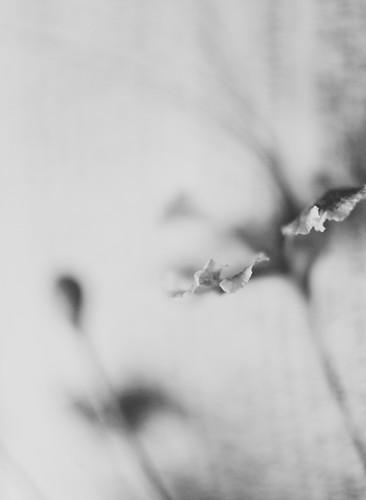 A Dark Melody.. by kaniths