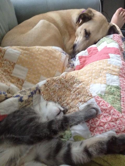 Furries Sleeping