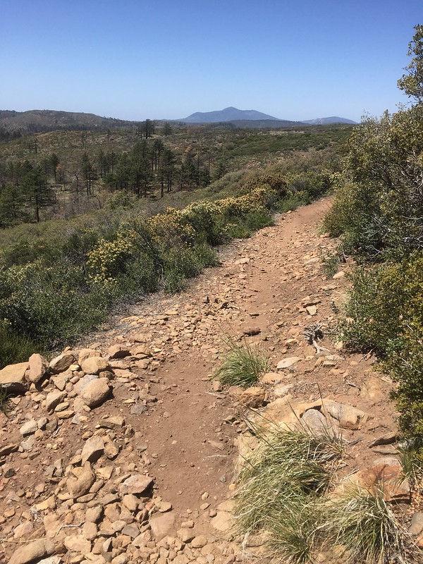 Trail out of Mt Laguna