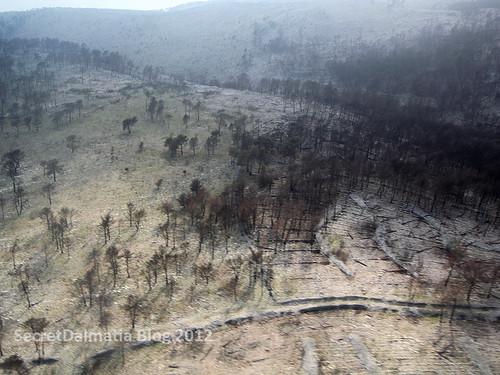 Burned down hillside