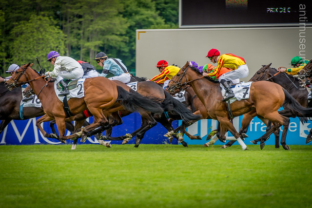 Longchamp - horse galop - finish
