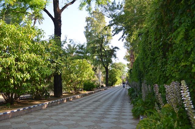 Parques y jardines rincones de sevilla for Jardines de murillo